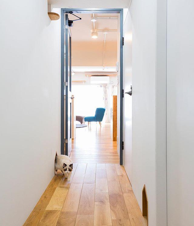 大の猫好きのご夫婦がリノベーションしたおうち。リビングから廊下、廊下から洗面所、それぞれの場所に愛猫リリーちゃん専用の通路穴が取り付けられています。リリーちゃんがストレスなく各部屋を移動できる工夫です。 . ▶詳しくは @renoveru のプロフィールから、施工事例「猫好きにはたまらない、肉球が見えるキャットウォークの家」をチェック! . #リノベる。 #リノベ #リノベーション #リノベーションライフ #マンション暮らし #マンションインテリア #マンションライフ #マンションリフォーム #中古マンション #中古マンションリノベーション #住まい #暮らしを楽しむ #シンプルな暮らし #日々のこと #日々の暮らし #ライフスタイル #ねこ #ねこのいる生活 #愛猫 #猫のいる生活 #猫と暮らす#猫のいる暮らし #にゃんすたぐらむ #ねこ好き #ねこlove #猫との暮らし #ライフスタイル #カフェ風インテリア #猫穴 #ねこ穴