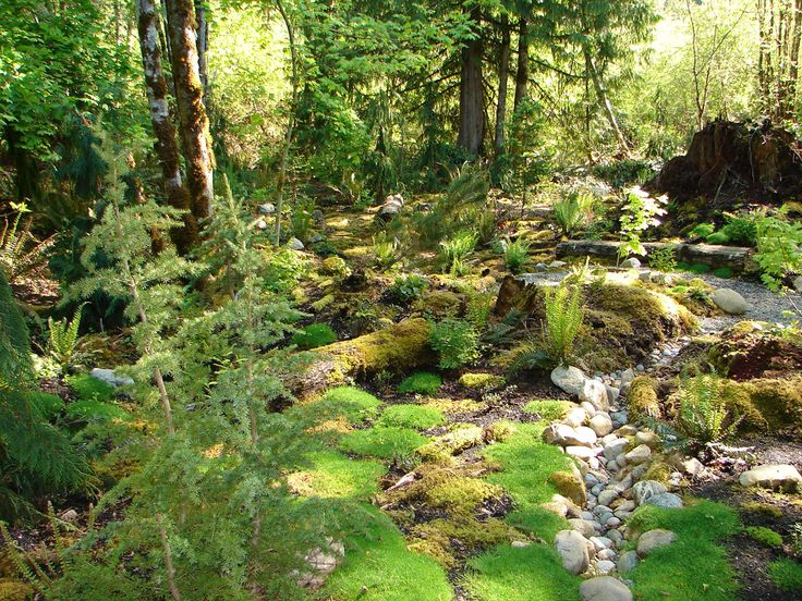 Landscaping Woodland Wa : Best ideas about woodland gardens on