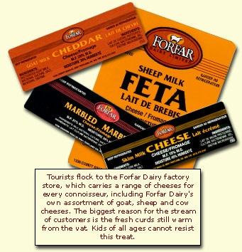 Fofar Cheese