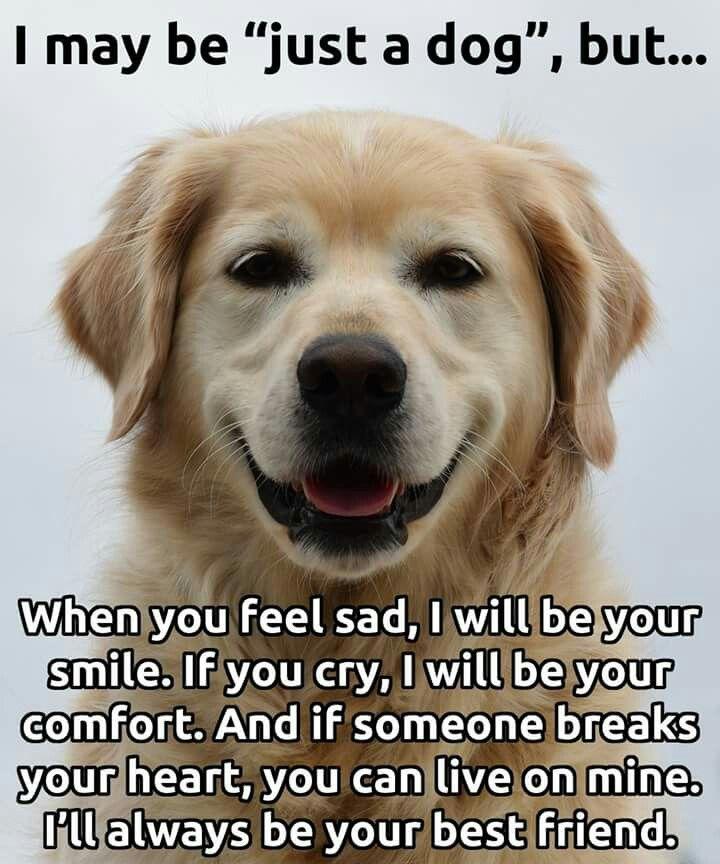 Pinterest Animal Quotes: Best 20+ Dog Quotes Sad Ideas On Pinterest