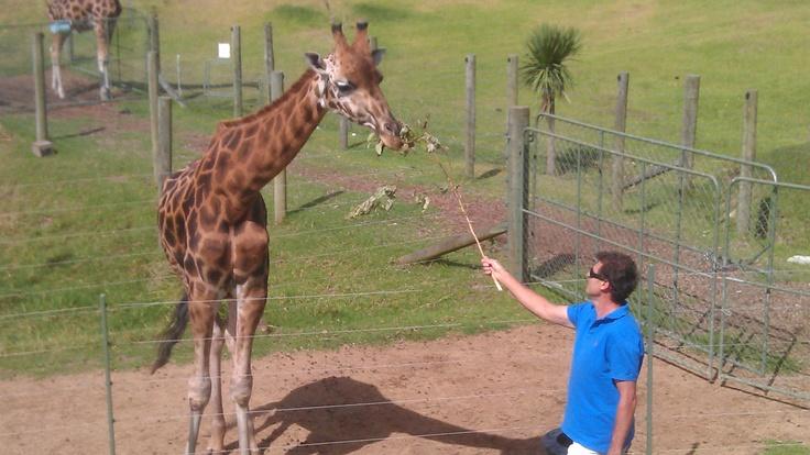 This was one hungry giraffe.     http://www.matakanacountry.co.nz/home/home/ #Matakana #New Zealand #travel #animals