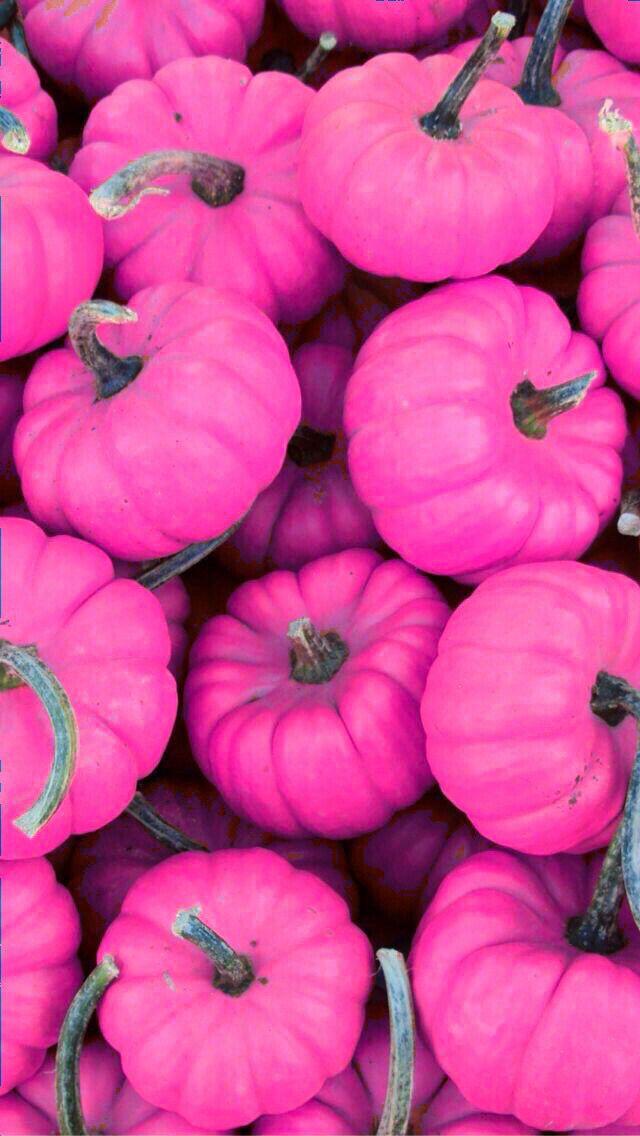 Fall Themed Iphone 6 Wallpaper Best 25 Pink Pumpkins Ideas On Pinterest Gold Pumpkin