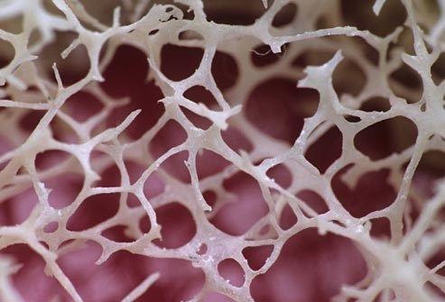 Bone Marrow Up Close