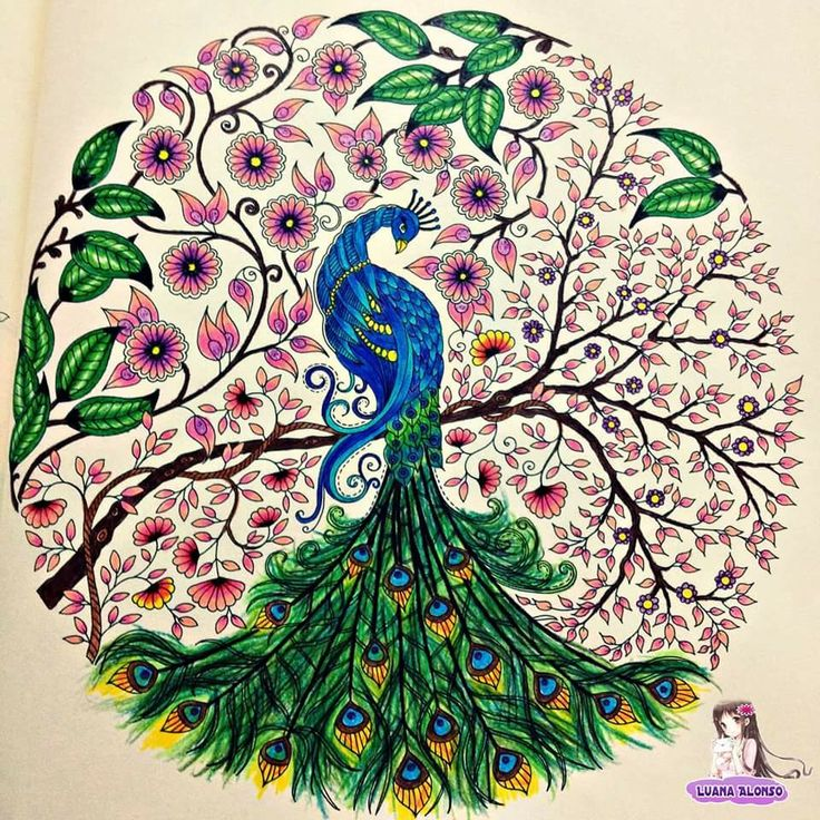 17 Best Images About Peacock Secret Garden Pavo Jardim Secreto On Pinterest