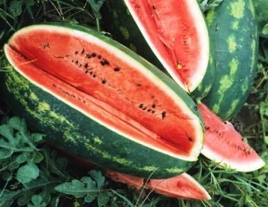 Every part of a watermelon is edible, even the seeds and rinds. Watermelon quenches your thirst. Watermelon is 92% water.