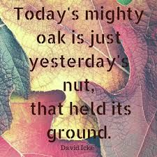 Image result for little acorns to mighty oaks