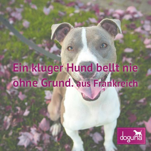 Ein kluger Hund bellt nie ohne Grund. (aus Frankreich) #dog #dogs #hund #hunde #zitate #quotes #germany #hamburg #fb