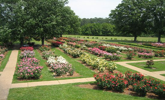 Norfolk Botanical Garden The Rose Garden Garden Pinterest Gardens Virginia And Norfolk