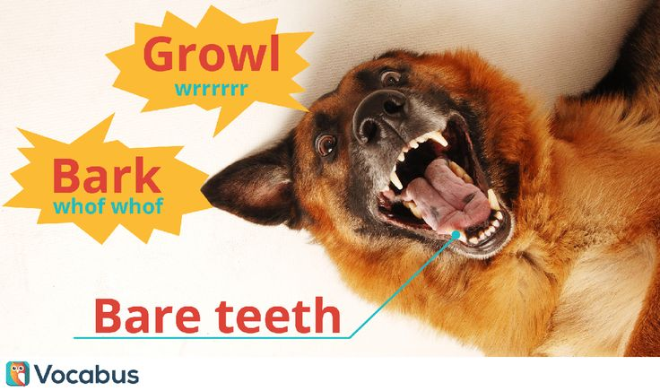 Kilka angielskich słówek związanych z psami. Do tego zdjęcie odjechanego piesa :)