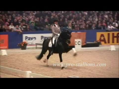 Moorlands Totilas. This horse is the best of the best in dressage. He is my inspiration. Edward Gal is riding him here.