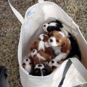 themagpieinher  #instadog #dogagram #dog #carrier