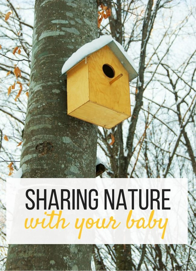 staying at home is for the birds 6 nature activities to do with babies