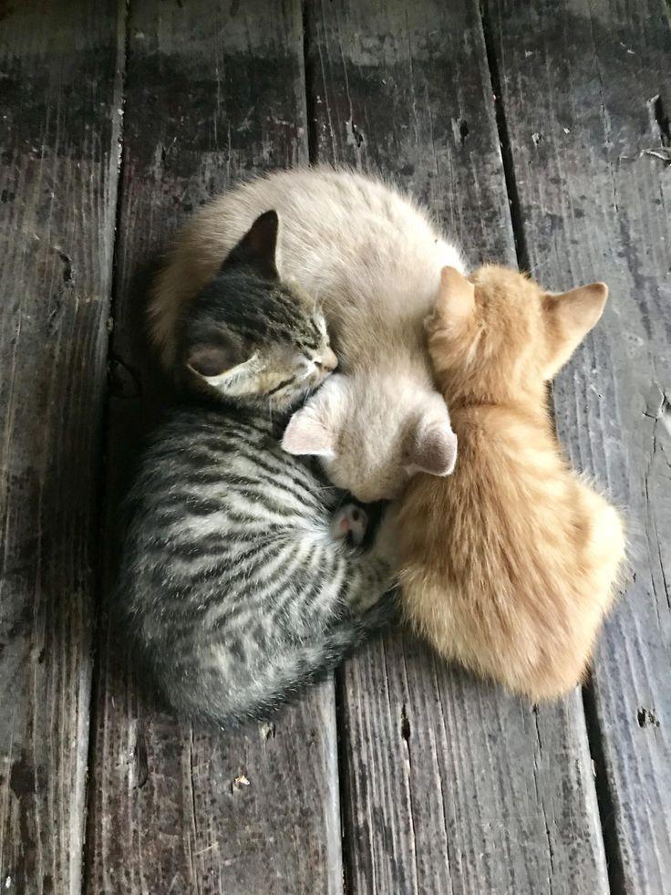 Ein Trio von Kätzchen. Blond, Lesekopf und Brünette. – #blond #brunette #kitten # … – Kittens