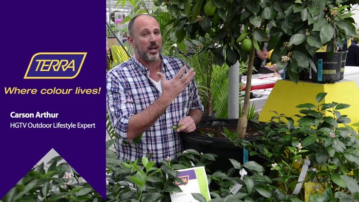 Watch as outdoor lifestyle expert Carson Arthur gives some great tips on how to care for a citrus tree!