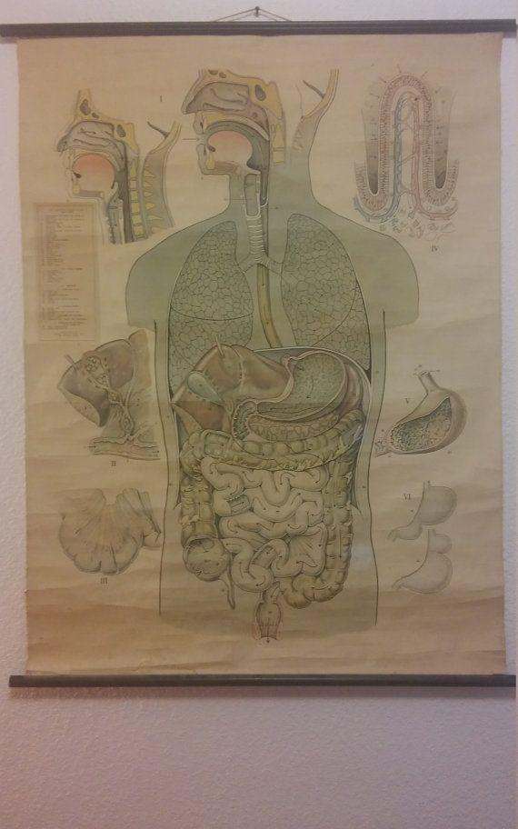 8 besten Vintage Anatomical Charts Bilder auf Pinterest | Anatomie ...