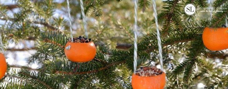 Orange Birdseed Ornaments   Homemade Citrus Bird Feeders