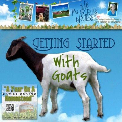 Getting Started With Goats