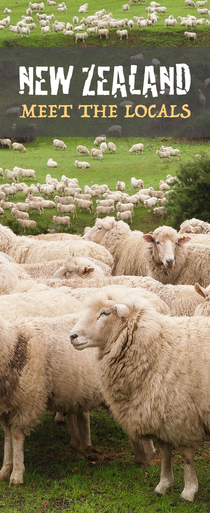New Zealand's Canterbury Plains is a little overcrowded... http://www.newzealandbyroad.com/