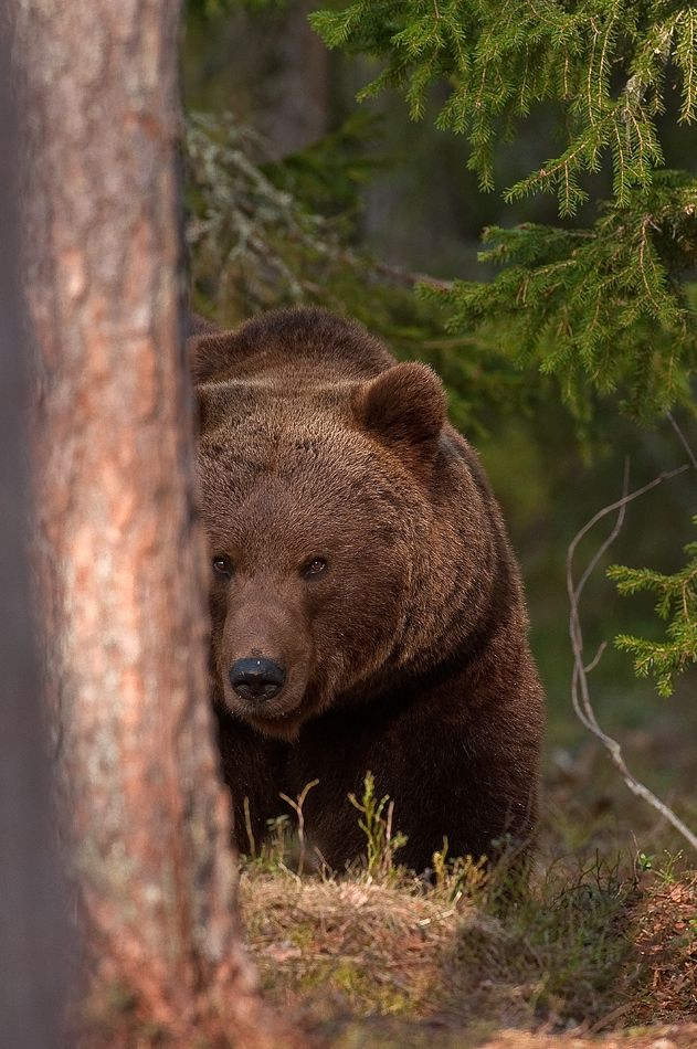 Bears. And any other animal which wants to rip open my flesh and have me for dinner.