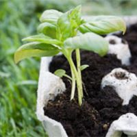 Learn all about growing a fantastic range of herbs, edible flowers and spices in the garden and in pots. Look at the most popular, and also a few unusual choices, as well as how they can be used in everyday cooking. Presented by horticulturalist, Claire Bickle. Bookings required. http://www.aroundyou.com.au/whats-on/events/garden-to-gourmet-at-ashgrove-library