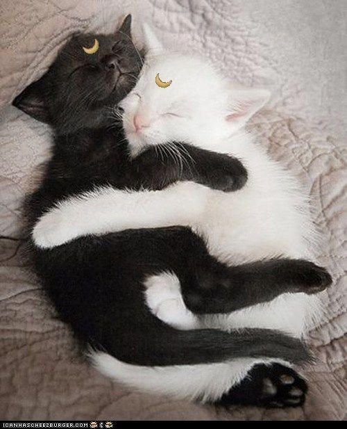 Luna & Artemis From: Sailor Moon Cosplay Pets: unknown  LOVE IT SO MUCHHHHH                                                                                                                                                                                 More