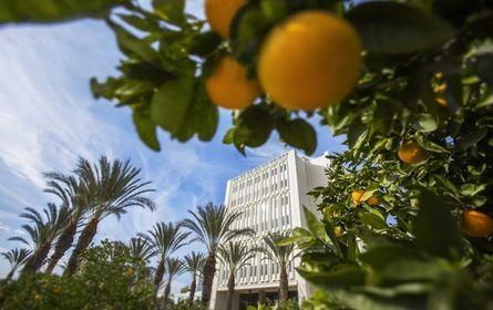 The beautiful orange trees on campus!   California State University--Fullerton | Cal State Fullerton ...