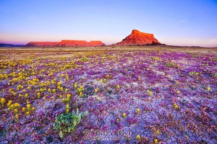 Las Mejores Fotografías del Mundo: Desierto florido en Colorado.