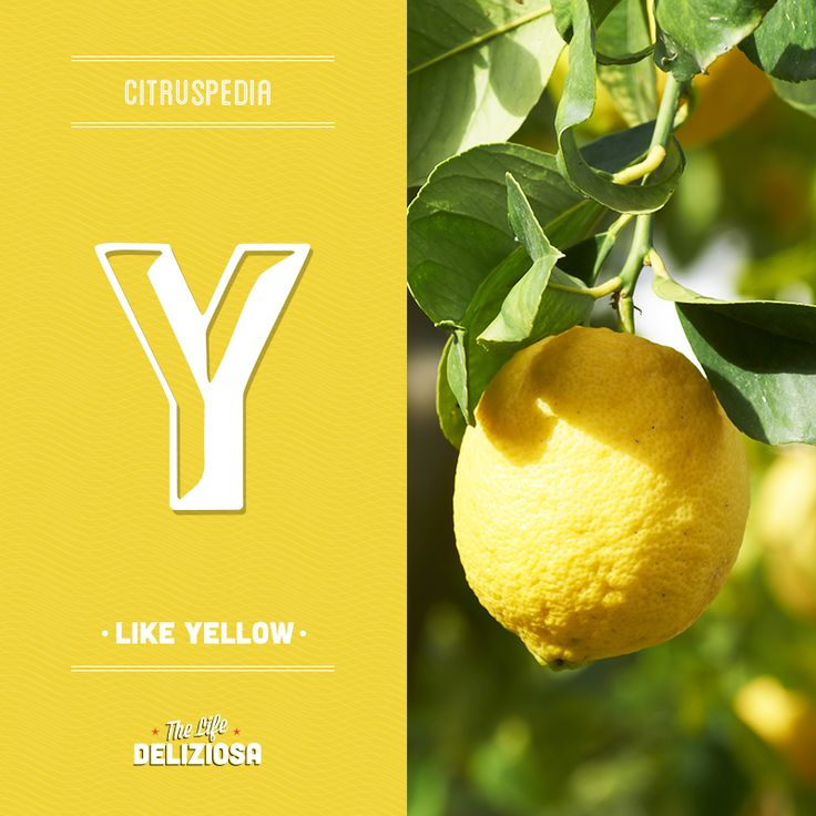 Many citrus fruits are yellow but the lemon is the yellowest of them all: why? Find out on our Citruspedia going to sanpellegrinofruitbeverages.com