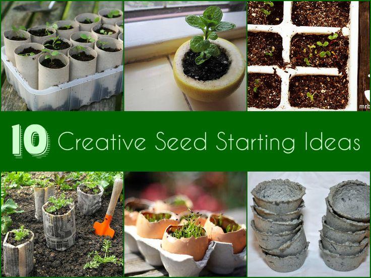10 Best Tips & Tricks For Starting Seeds Indoors