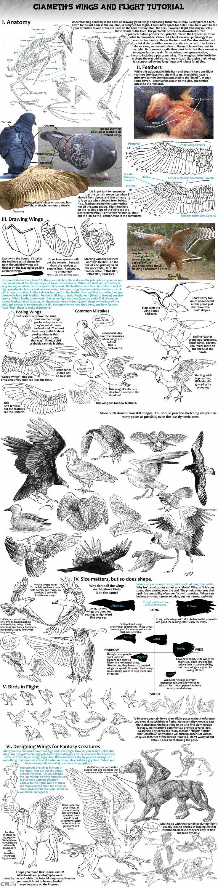 Animals Used in Education | PETA