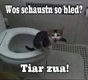 mehr lustige bilder und sprüche findest du hier: http://lachlos.ch