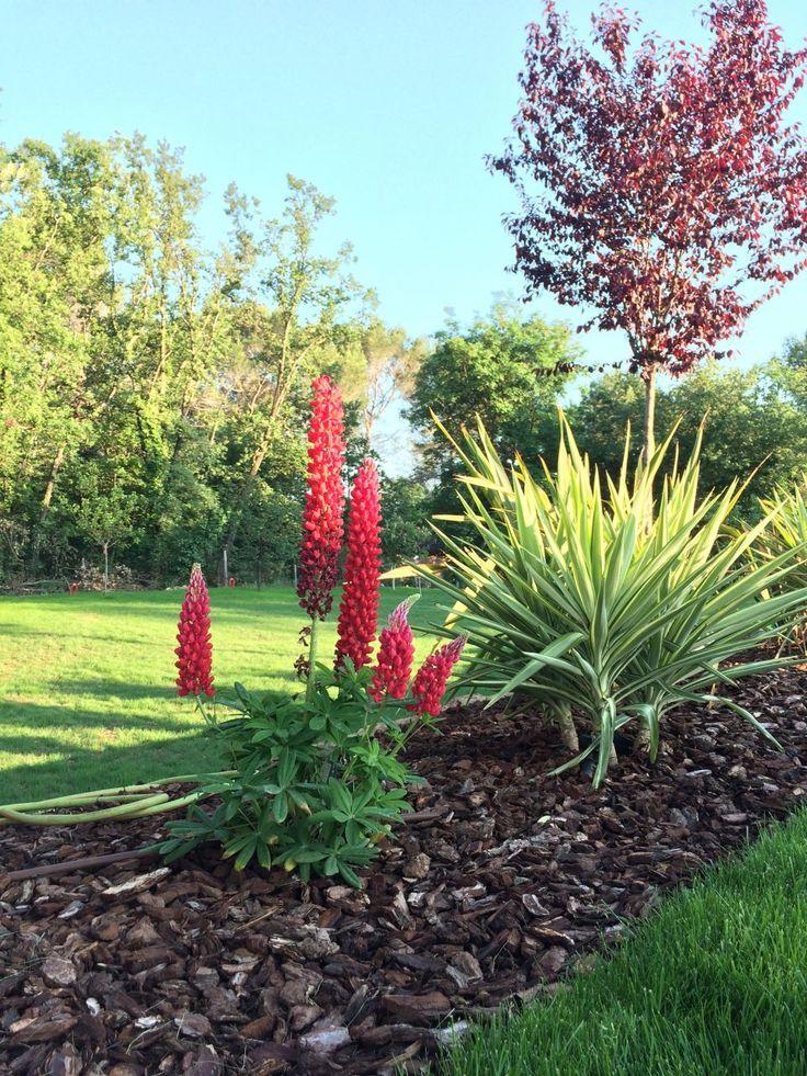 La nature s'installe... - Notre maison a Roquefort-les-pins par LaurentJ sur ForumConstruire.com