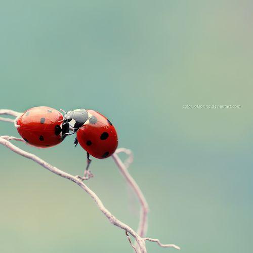 .Ladybugs Ladybugs, Sweets Kisses, Ladybeetle, Funny Animal, Lady Beetles, Kisses For You, Lady Bugs, Things Ladybugs, Lady Beatles
