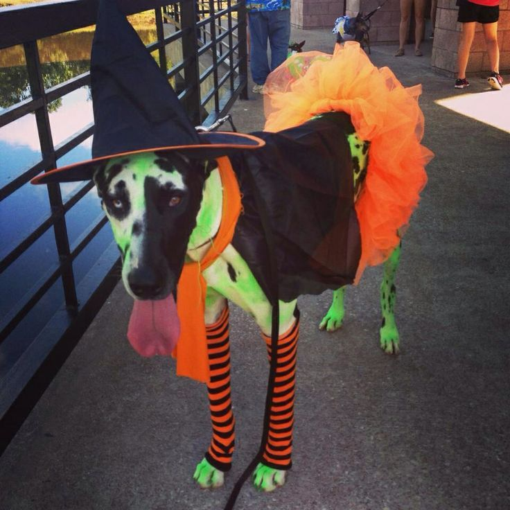 Wicked Witch from the Wizard of Oz dog costume