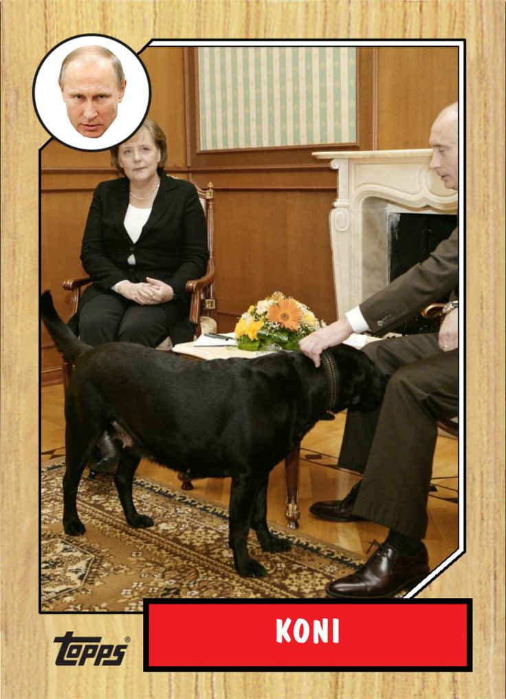 Vladimir Putin: I didn't mean to scare Angela Merkel with my dog By Tim Hume, CNN January 12, 2016  Merkel, reportedly fearful of dogs since one attacked her in 1995, was photographed looking distinctly uncomfortable when Putin brought his large black Labrador Koni into a meeting at his summer residence in Sochi, Russia, in January 2007.