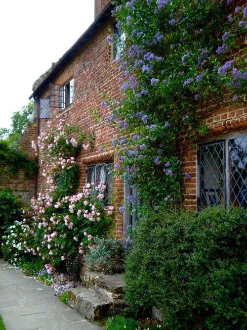 """pagewoman: """" Ceanothus and Roses at Sissinghurst Castle, Kent, England via sissinghurst n.t """""""