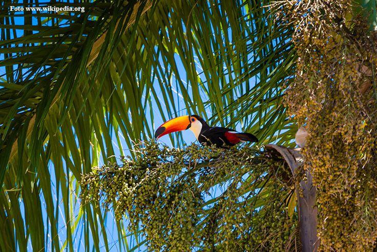 Resultado de imagem para flor bico de tucano