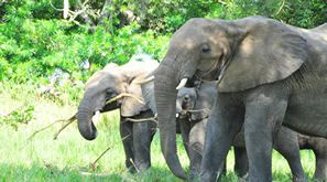 Book your package today for ultimate African safari experience with African Crane Safari. We provide you best tours like gorilla trekking, Uganda safaris, Rwanda safaris, Chimpanzee Trekking, African cultural tours etc. So choose our travel package for best ecperience.