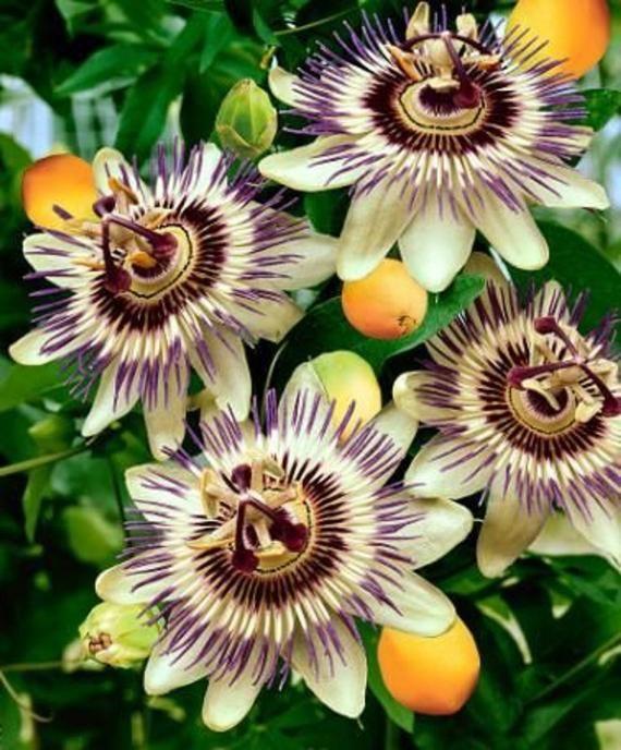 Pin On Beautiful Blooms