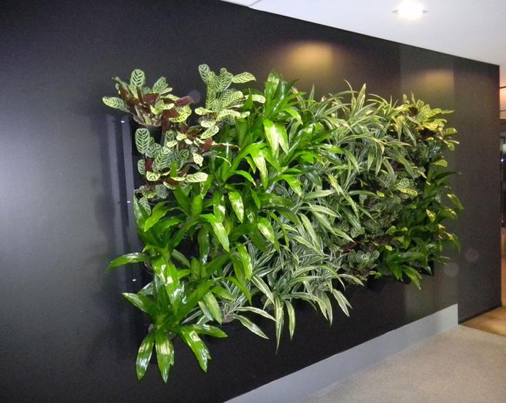 Who wants one of these? Yes please. Talk to Green Design for Green Wall ideas at www.greendesign.com.au