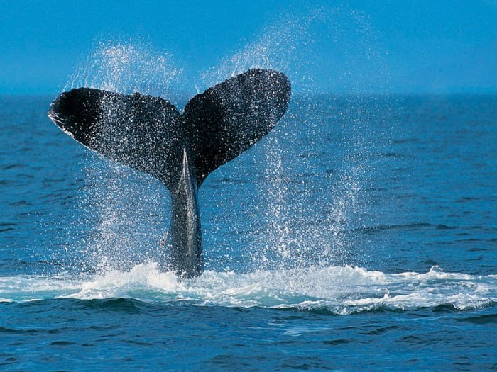 Le balene in Baja California