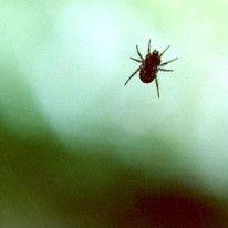 Weg met spinnen