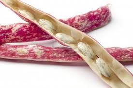 Risotto con fagioli borlotti freschi (ricetta milanese)