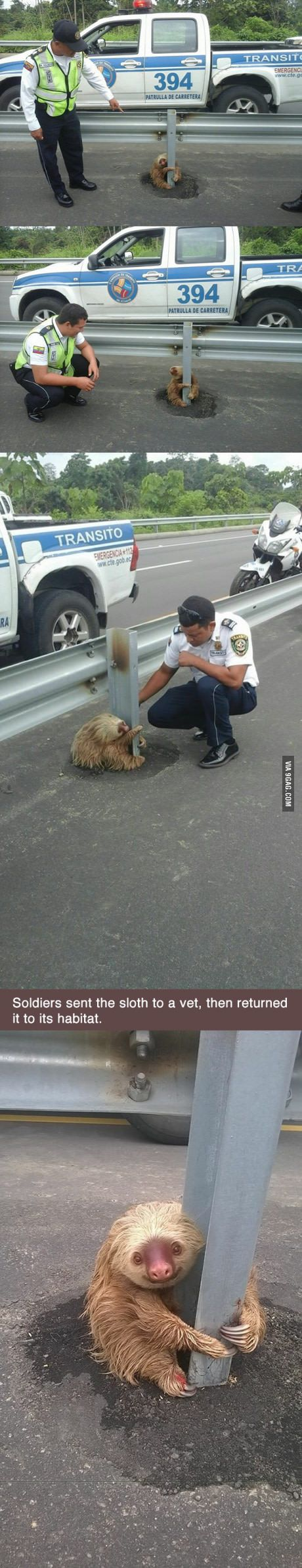 Little sloth tries to cross the highway in Ecuador, gets scared, can't move