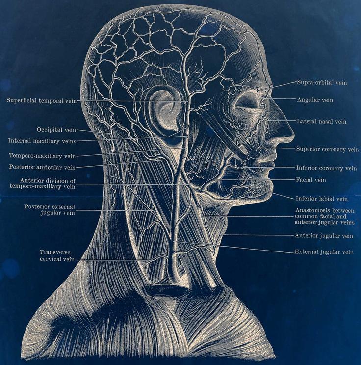 82 best Anatomy N\' Physiology images on Pinterest | Health, Medicine ...