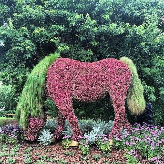 Topiary Horse - atlanta botanical garden