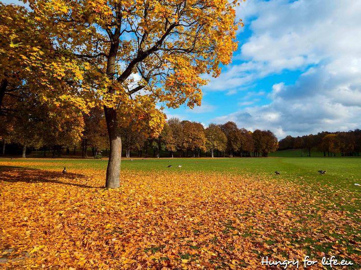 2016, осень, Германия, Бавария, Мюнхен, парк, природа, 2016 autumn, Germany, Bavaria, Munich, park, nature