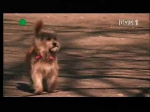 Zwierzeta swiata Co wiemy o psach 02 - YouTube