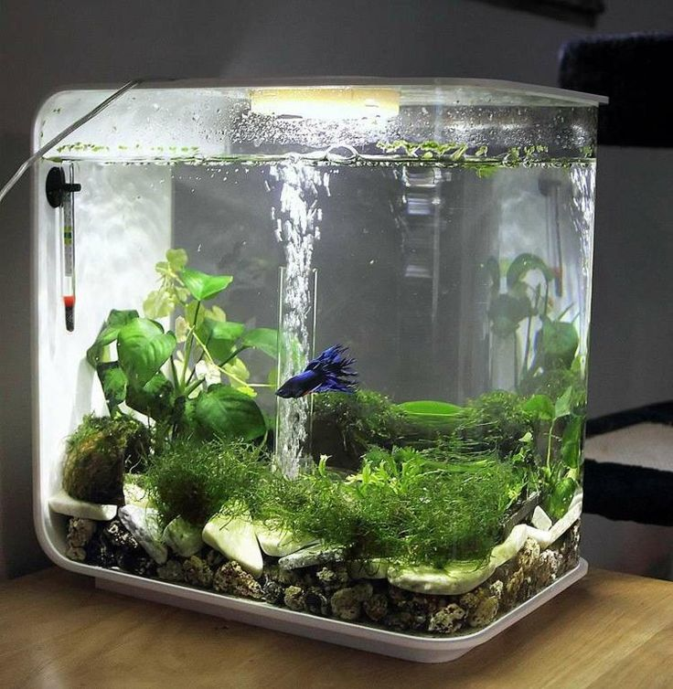petit aquarium de forme originale                                                                                                                                                     More