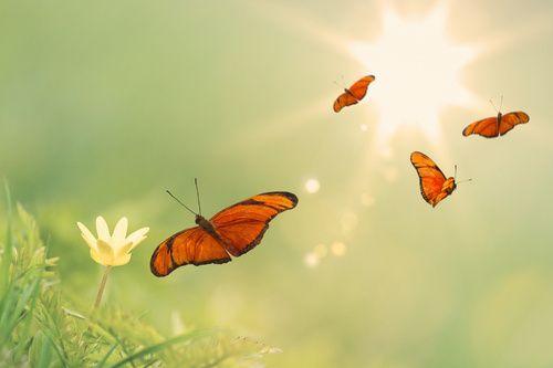 vlinders prachtige oranje kleuren, dansen in de lucht op een groene achtergrond  2 5 1 2